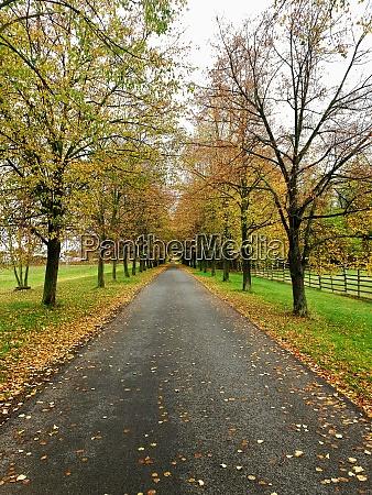 autumn alley path