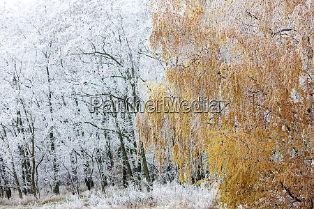 winter landscape moravia region czech republic