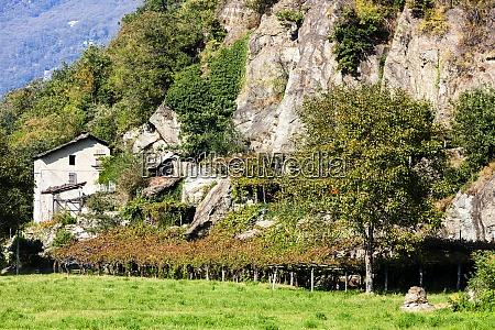 vineyard valle daosta in italy