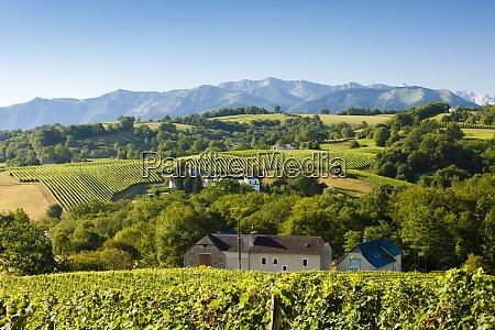 vineyard in south jurancon france