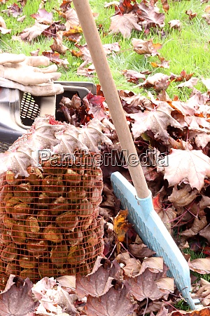 harvest rake chestnuts and leaves harvest