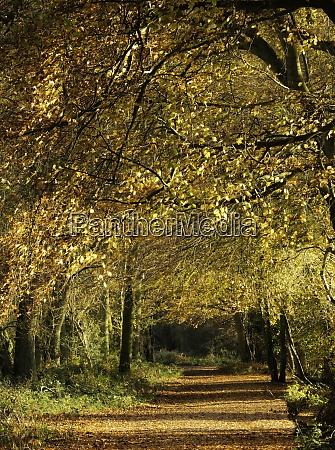 uk hertfordshire ashridge woods