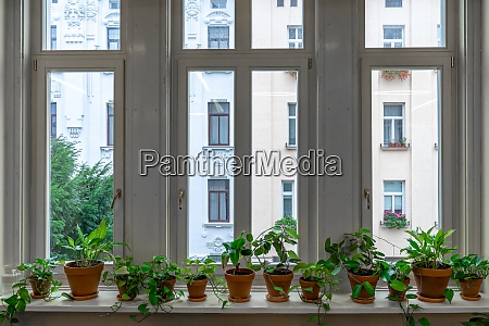 large window with interior flowers on