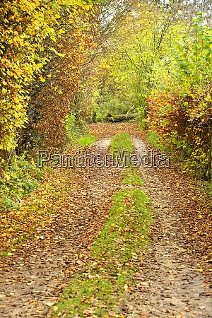 forest in autumn with way