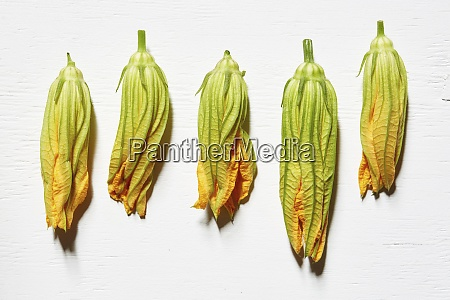 squash blossoms on white background