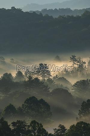 usa georgia fog above pine trees