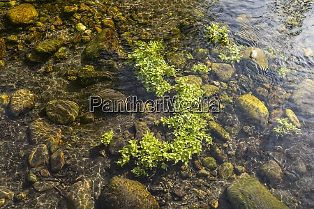 close up of water plant and