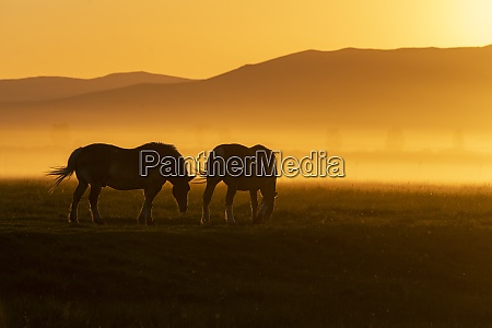 usa idaho sun valley horses grazing