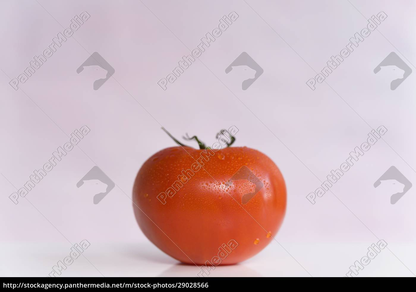 red, tomato, on, white, background - 29028566