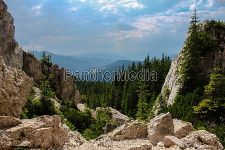 landscape of mountains with forest and