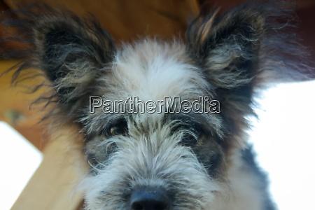 close up of dog dog