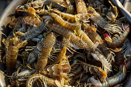 fresh seafood for selling
