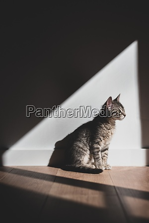 a cat sitting indoors and enjoying