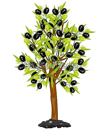 vector illustration tree with fruit olive