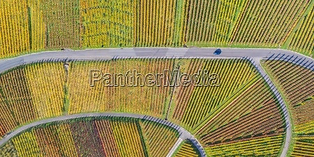 vineyards wine autumn fall season nature