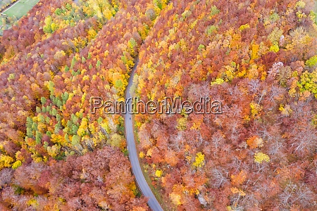 autumn fall forest woods colorful leaves