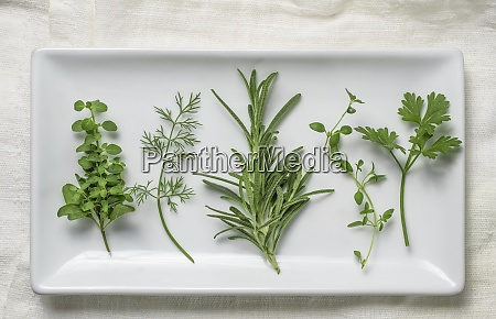 herbs on white plate