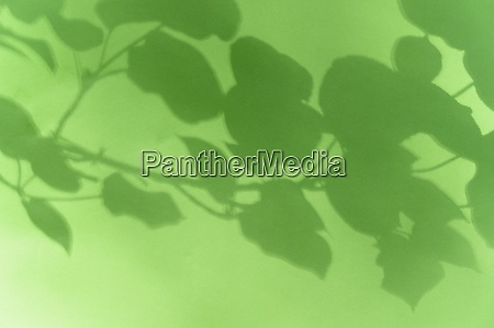 shadow of leaves on green background