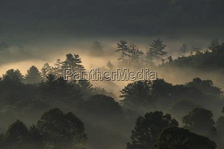 usa georgia silhouettes of trees covered