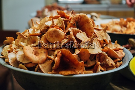 mushroom harvest many autumn plants mushroom