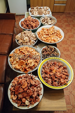 mushroom harvest many mushrooms in basins