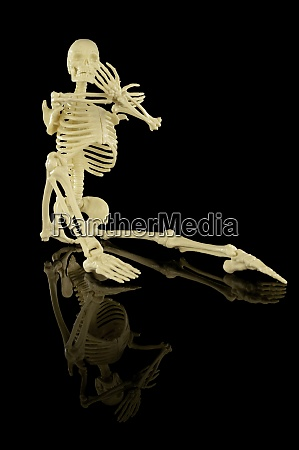 whole human skeleton