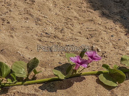 blossoms from plants on a sandy