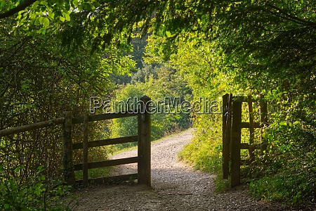 path and gate in countryside surrey