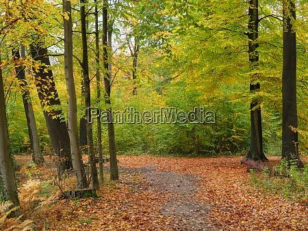 autumn in the german muensterland