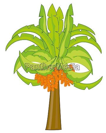 vector illustration of the palm with
