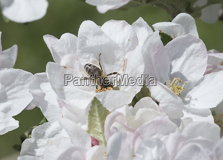 bee sitting on a flower blossom