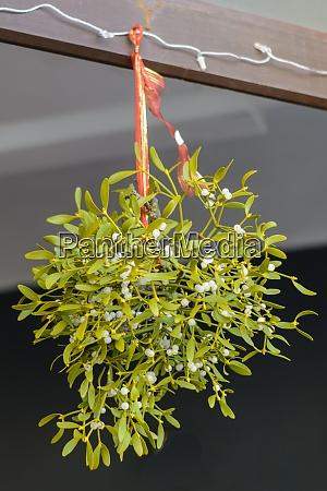 white berry mistletoe christmas custom