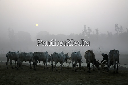 misty morning in the bengal countryside