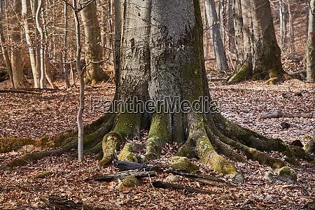 tree trunk in autumn