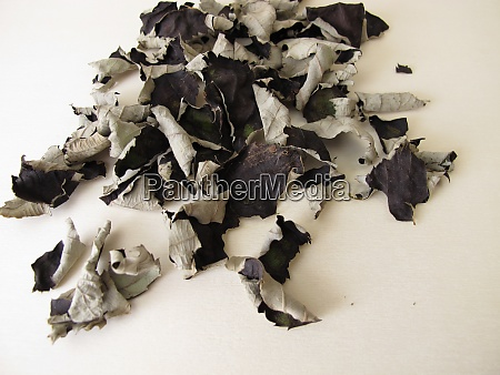 fermented and dried blackberry leaves for