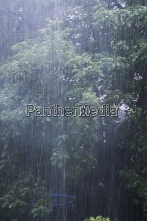 rain as life force for plants