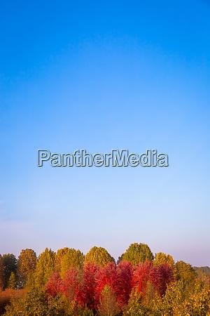 fall season with blue sky and