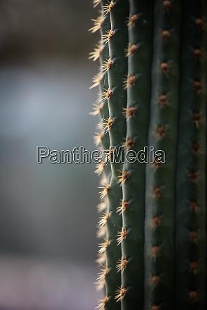 green cactus thorns detail
