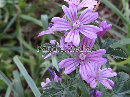 beautiful purple flowers of curious color