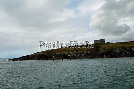 dolphin tour carrigaholt macmahon castle