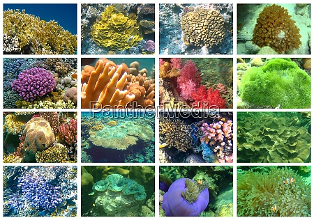 tropical sea underwater with coral reefs