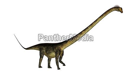 barosaurus dinosaur walk 3d render