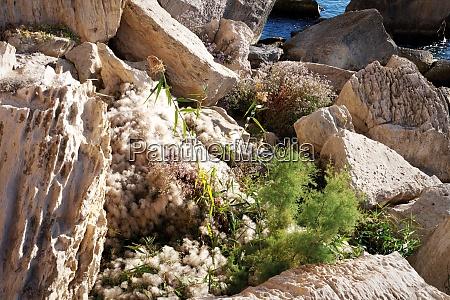 rocky coast of the caspian sea