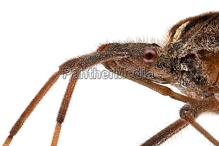 insect extreme close up