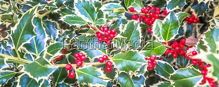 holly barries background traditional symbol of