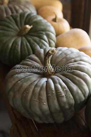 close up green pumpkins