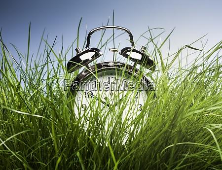 alarm clock hiding in tall grass