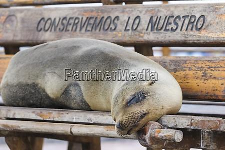 ecuador galapagos islands san cristobal dozing
