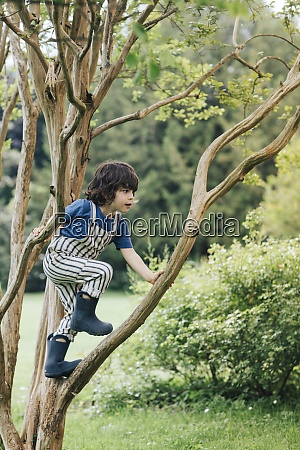 cute boy climbing tree while playing