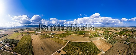 panoramic view of olive fields against
